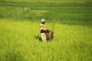 man rice burma rules for life